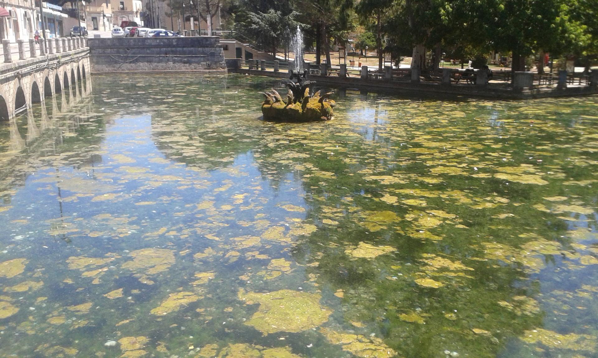 Alghe plastica barattoli carta e rifiuti vari nel for Alghe filamentose nel laghetto